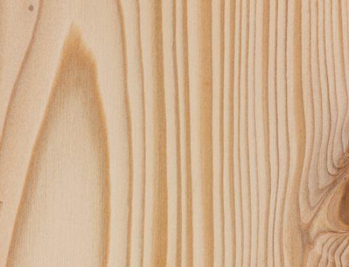Bristlecone fir