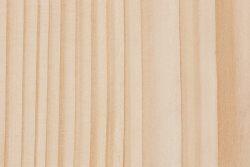 Greek fir (Abies cephalonica)