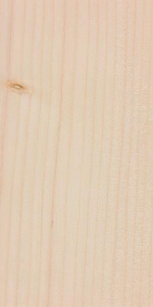 Fraser fir (Abies fraseri)