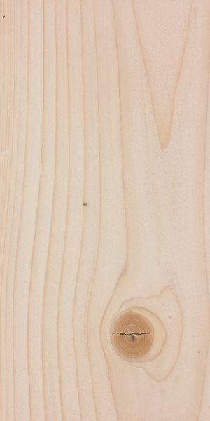 Grand fir (Abies grandis)