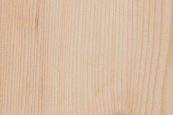 California red fir (Abies magnifica)