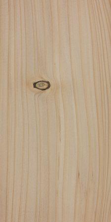 Nordmann fir (Abies nordmanniana)