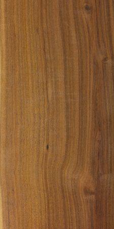 Mulga (Acacia aneura)