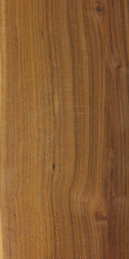 Mulga The Wood Database Lumber Identification Hardwood