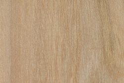 Cootamundra wattle (Acacia baileyana)