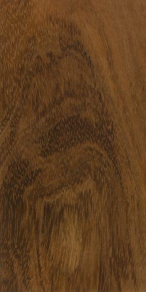Formosan koa (Acacia confusa)