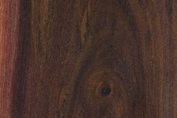 Pink gidgee (Acacia crombiei)