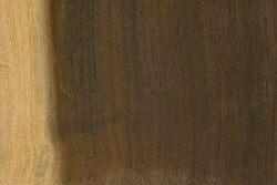Creekline miniritchie (Acacia cyperophylla)