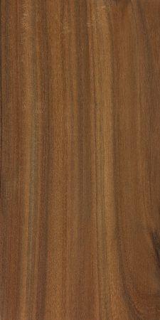 Brown lancewood (Acacia doratoxylon)