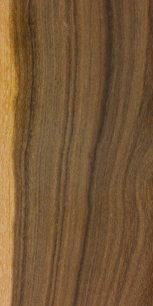 Ironwood wattle (Acacia excelsa)