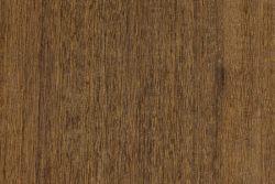 Brigalow (Acacia harpophylla)