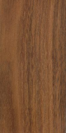 Lightwood (Acacia implexa)