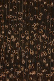 Lightwood (endgrain 10x)