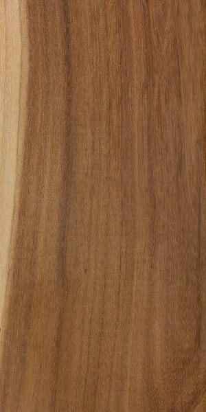 Curracabah (Acacia leiocalyx)