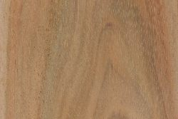 Black Wattle The Wood Database Lumber Identification Hardwood