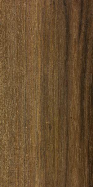Myall (Acacia pendula)