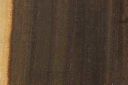 Waddywood (Acacia peuce)