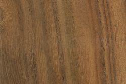 Cooba (Acacia salicina)