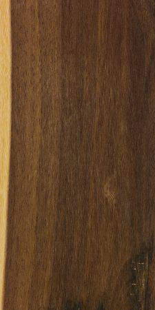 Shirley's lancewood (Acacia shirleyi)