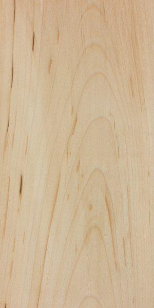 Black maple (Acer nigrum)