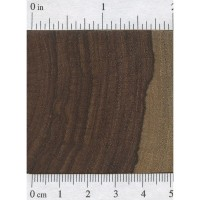 Amazon Rosewood (endgrain)