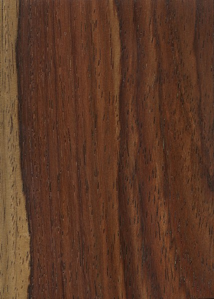 Amazon Rosewood The Wood Database Lumber Identification Hardwood