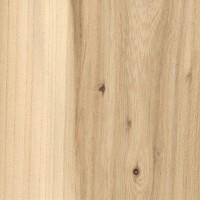 American Elm (Ulmus americana)