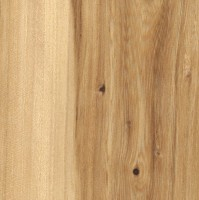 American Elm (sealed)