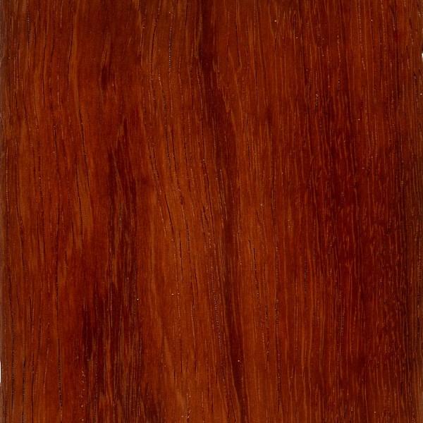 Andaman Padauk The Wood Database Lumber Identification Hardwood