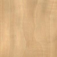 Anigre (Aningeria spp.)