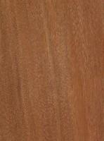 Araracanga (Aspidosperma megalocarpon)