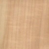 European Aspen (Populus tremula)