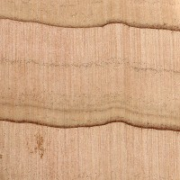 Atlantic White Cedar (endgrain 10x)