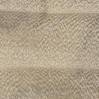 Balsam Poplar (endgrain 10x)