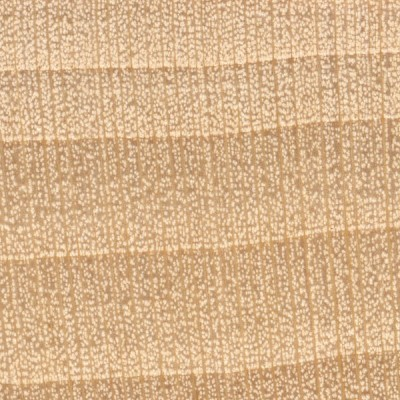 Basswood (endgrain 10x)