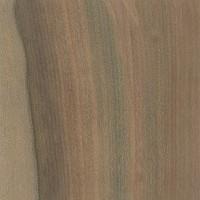 Blackheart Sassafras (Atherosperma moschatum)