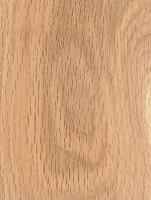 Black Oak (Quercus velutina)