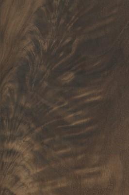 Black Walnut (crotch)