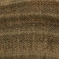 Black Willow (endgrain 10x)