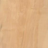 Boxwood (Buxus sempervirens)