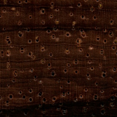 Brazilian Rosewood (endgrain 10x)