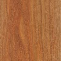 Brazilwood (Caesalpinia echinata)