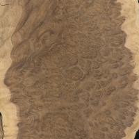 Brown Mallee burl (Eucalyptus spp.)