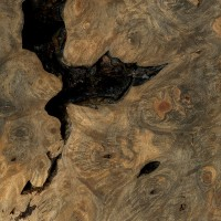 Buckeye Burl (sealed)