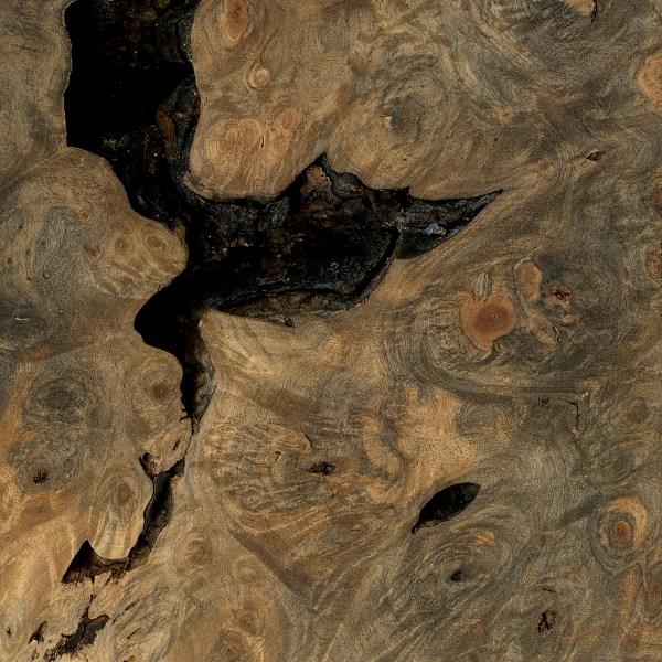 Buckeye The Wood Database Lumber Identification Hardwood