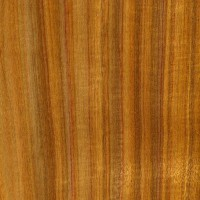 Canarywood (sealed)