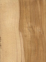 Mockernut Hickory (sealed)