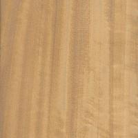 Ceylon Satinwood (Chloroxylon swietenia)