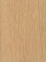 Chestnut Oak (Quercus prinus)
