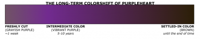 colorshift of purpleheart